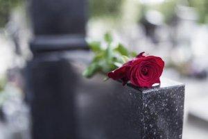 róża na grobie